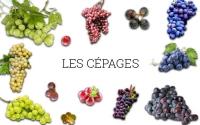 LEXIQUE DES CÉPAGES